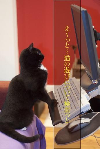 2015_05_24_猫の遊びの習性について