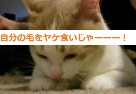 猫-自分の毛を食べる
