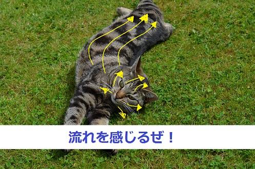 猫-毛の流れ背中と顔まわり