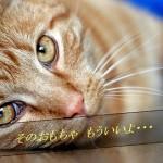 猫のおもちゃ まとめ マジで猫と遊びたい人だけ秘密を教えます