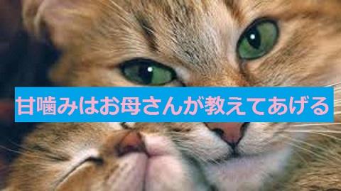 2015_05_14_猫しつけ-甘噛みは母親から教わるもの