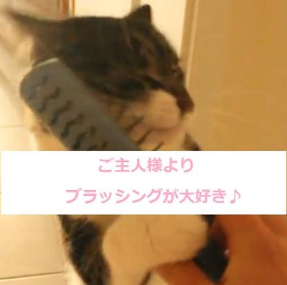 猫-ブラッシング大好き