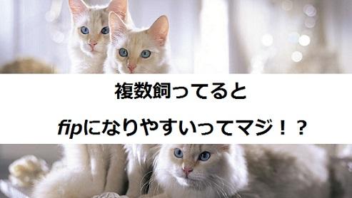 2015_05_19_fip-猫を複数飼ってるとなりやすい