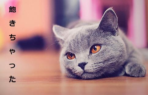 2015_05_14_猫のしつけ方-集中力は10分