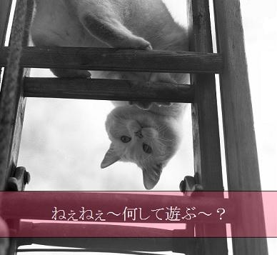 2015_05_24_猫-遊びは何が好き