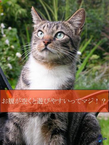 2015_05_24_猫はお腹が空くと遊びやすい