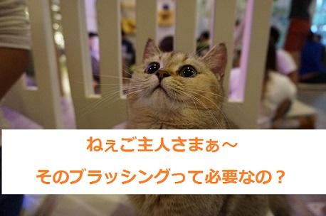 猫はブラッシングのやり方次第で機嫌が180℃変わる!?鳴く子がもっと鳴くブラッシングの方法を教えます!!