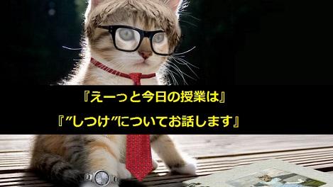 猫のしつけ方 なかなか覚えてくれない猫に効果的なしつけ方を教えます!!