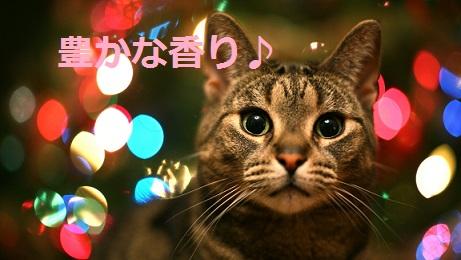 2015_05_04_猫-豊かな香り