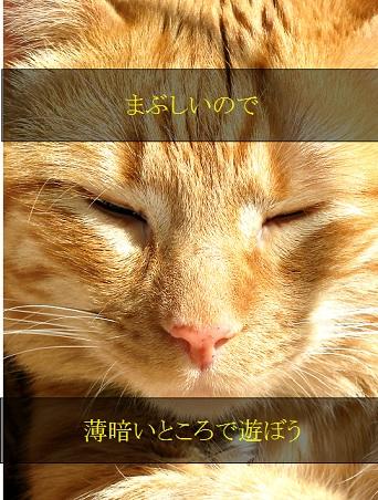 2015_05_24_猫-薄暗いところで遊ぶ