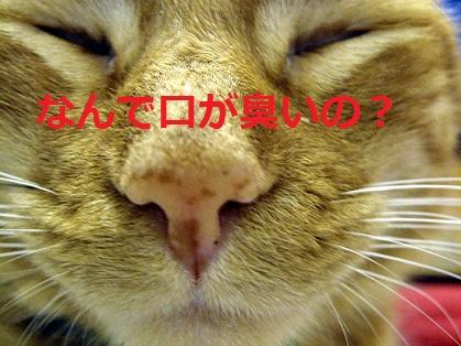2015_05_04_猫-なんで口が臭いの