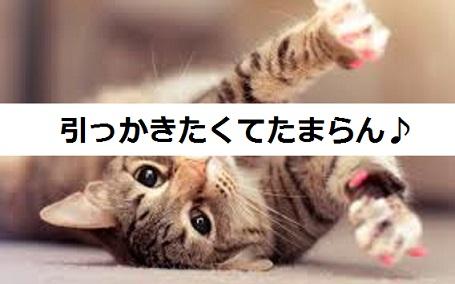 2015_05_14_猫しつけ-爪とぎの最適な場所