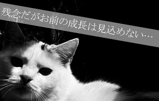2015_06_19_子猫の成長が見込めないと食われる