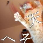 猫のへそ天!!飼い主のニヤけが止まらない猫のへそ天画像をお届けする!!(猫化の動物もあるよ)