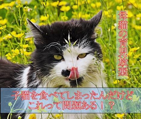 2015_06_19_母猫-子猫を食べる-育児放棄