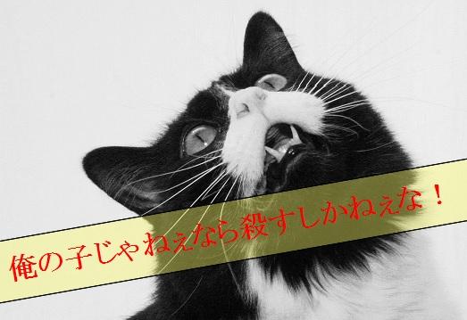 2015_06_19_オス猫がメス猫の前で子猫を殺す理由