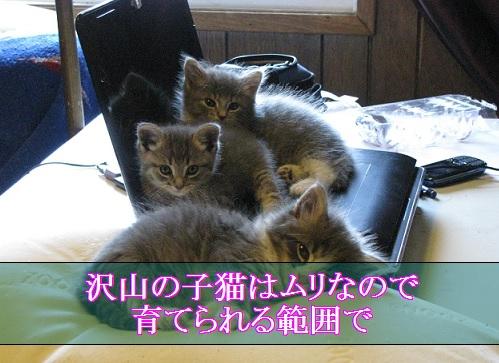 2015_06_19_子猫が多いと育てられる範囲に数を減らす