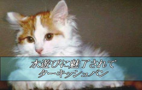 2015_06_07_ターキッシュバン