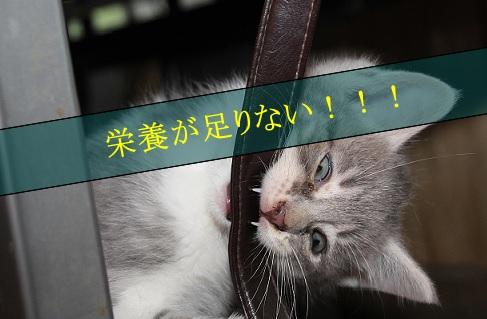 2015_06_19_極度の栄養失調は子猫を食べる場合がある