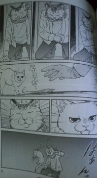 2015_07_18_odette-猫の彼氏が近所の野良猫と戦うシーン2
