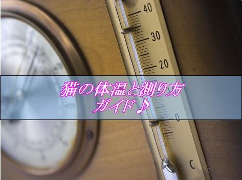 2015_08_28_猫の体温と測り方ガイド