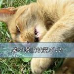 猫の暑さ対策ガイド