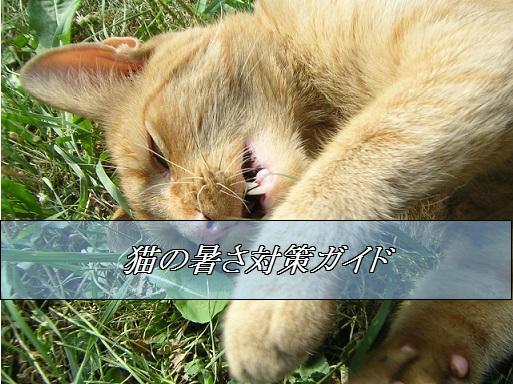 2015_08_28_猫の暑さ対策ガイド