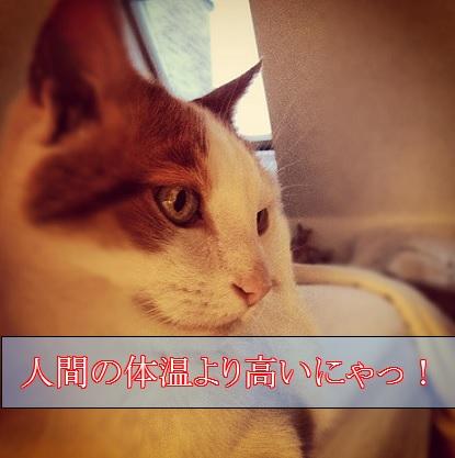 2015_08_28_猫の体温は人間より高い