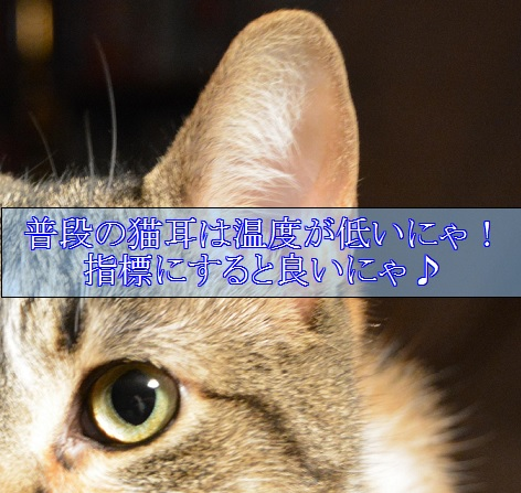 2015_08_28_猫耳は普段は温度が低い