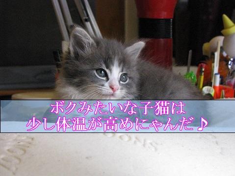 2015_08_28_子猫の体温は少し高め