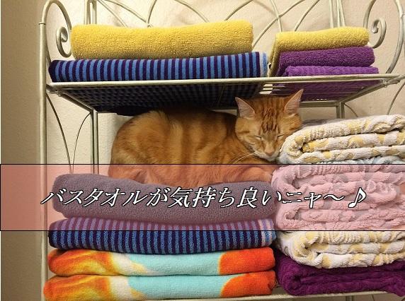 2016_01_07_バスタオルが気持ちよい猫