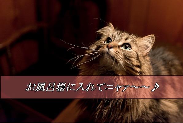 2016_01_07_お風呂場に入りたがる猫
