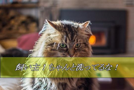 2016_01_07_お風呂にいる飼い主を見つめる猫