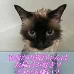 猫はお風呂が入るの好き?それとも嫌い?
