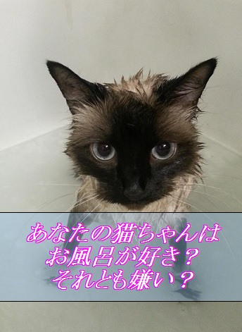 猫はお風呂に入るのが好き?嫌い?