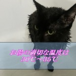 猫をお風呂に入れるときの温度は何℃が最適か!?