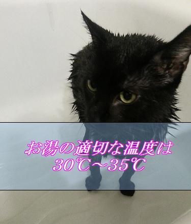 猫お風呂のお湯の適切な温度は30度から35度