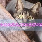 猫ってお風呂が必要ないの知ってる!?