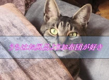 猫にお風呂は必要ない