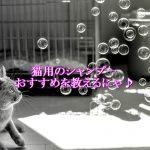 猫用シャンプーおすすめBEST4選