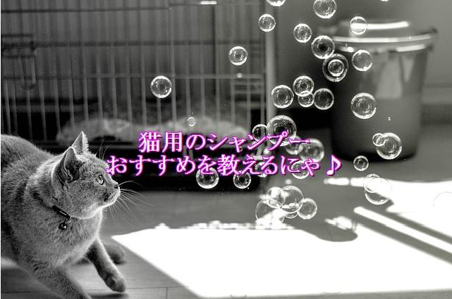 猫用シャンプーおすすめ