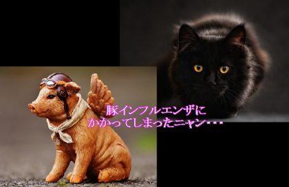 猫-豚インフルエンザにかかる