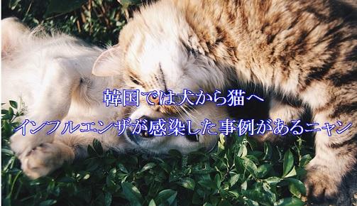 韓国-犬から猫へインフルエンザ感染