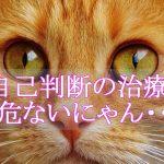 しつこい猫風邪にご注意ください!!よくある症状や予防についてお話します