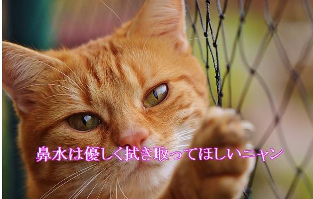 猫-鼻はデリケートなので優しく
