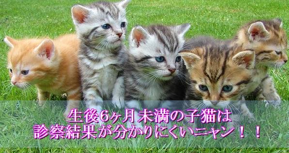 猫エイズ-子猫は誤診の可能性もある