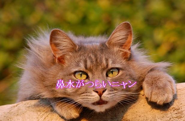 猫-鼻水-つらい