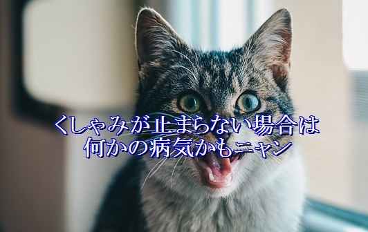 猫-くしゃみが止まらない-何かの病気かも