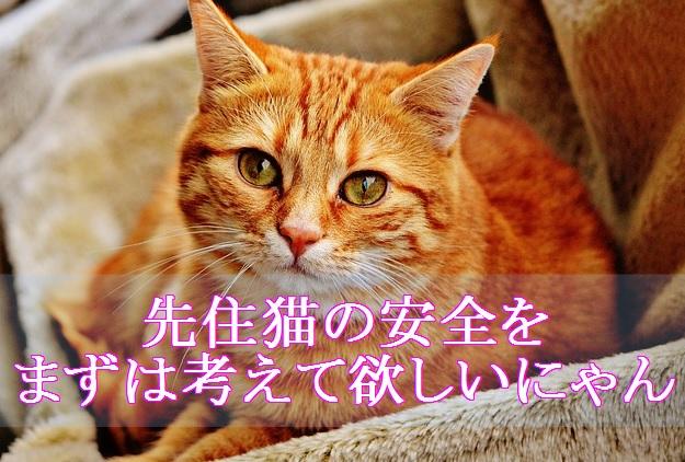 猫-風邪-野良猫保護で先住猫に危害が及ぶ