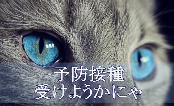 猫-風邪-予防接種で病気を未然に防ぐ